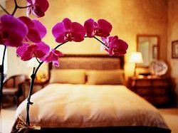 Домашние цветы и домашние растения по фен шуй