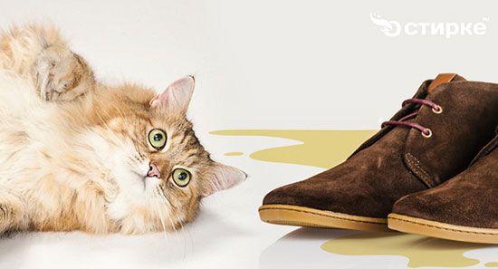 Как бороться с запахом кошачьей мочи в обуви