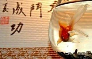 Символ рыбы в фэн-шуй